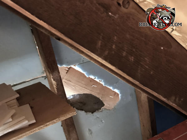 Squirrel Damage In The Attic Of A House In Atlanta