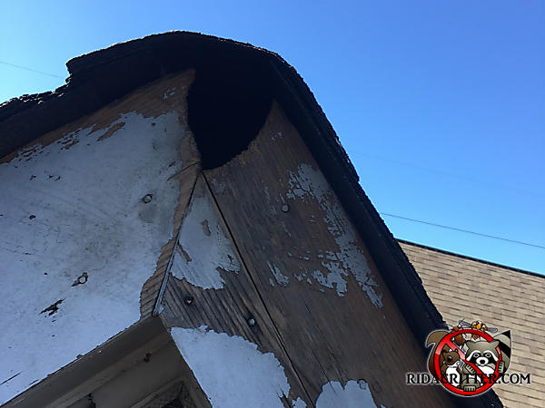 Squirrel hole shaped like an inverted teardrop through the roof trim at the very peak of a house in Berkeley Lake Georgia