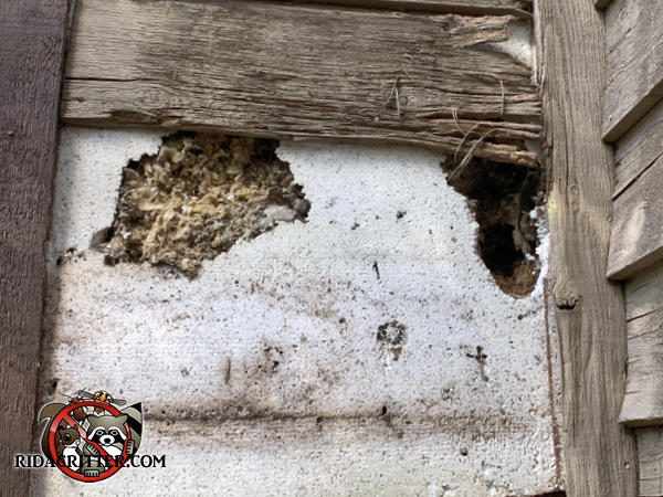 Squirrels chewed holes through the foam shingles and wall sheathing on the chimney of the house
