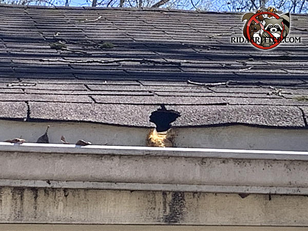 Squirrel hole in the edge of the roof of a house in Conley Georgia