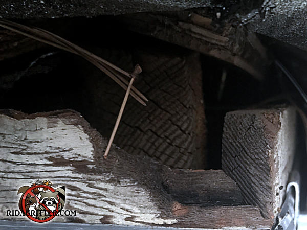 Baseball sized squirrel hole with rub marks stains through the wooden fascia under the roof sheathing of a house in Dallas Georgia