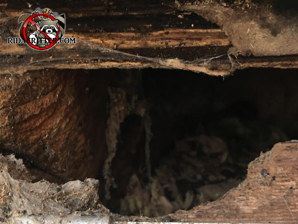 Baseball sized hole gnawed by squirrels through the fascia board and into the attic of a house in Doraville Georgia