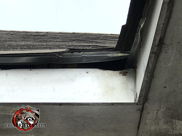 Squirrel chewed a bit at the top of the fascia to get into a house in Dunwoody Georgia