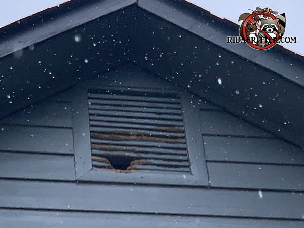 Baseball sized squirrel hole gnawed through a wooden gable vent and into the attic of a house in Marietta Georgia