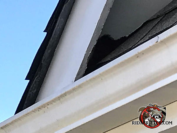 Squirrel hole in a soffit panel at a roof junction point at a house in Atlanta