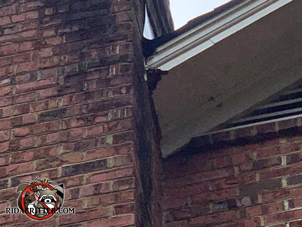 Squirrel chew hole in the soffit panel near the brick chimney of a house in Winder Georgia