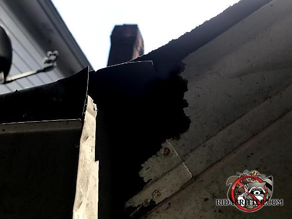 Squirrel hole through the diagonal roof trim where it meets the rain gutter of a house in Johns Creek Georgia