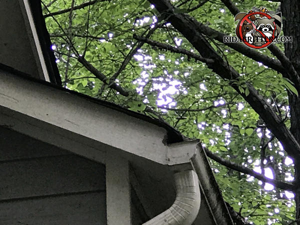 Squirrel chew hole in the end of the soffit behind the rain gutter of a house in Kennesaw Georgia