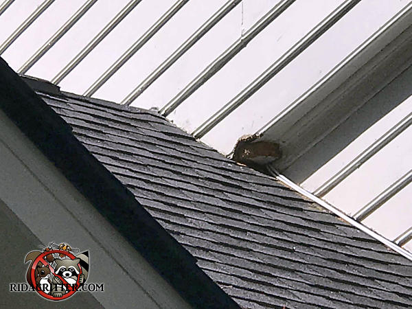 Squirrel hole in an overhang by the roof junction of a house in Mableton Georgia