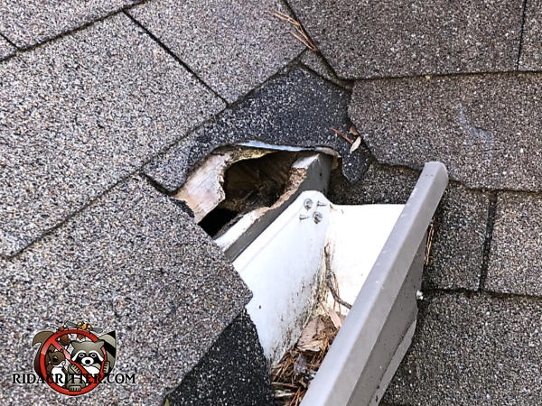 Fist sided squirrel hole through the shingles sheathing and fascia next to the rain gutter of a house in Hoover Alabama