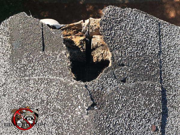Fist sized squirrel hole through the shingles and fascia on the very peak of the roof of a house in Mount Airy Georgia