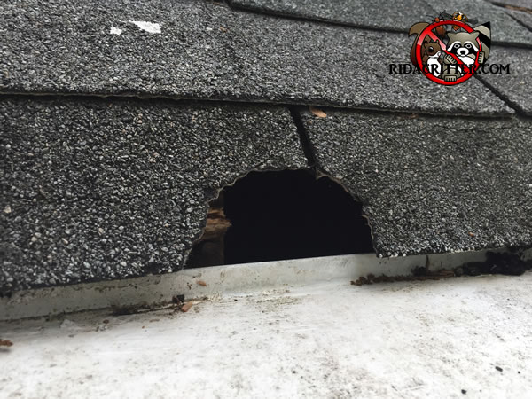 Squirrel Removal And Damage Repair Roswell Alpharetta
