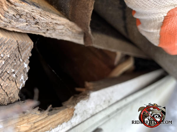 Squirrel chewed into the fascia to enlarge a construction gap so it could get into the attic of a house in Roswell Georgia