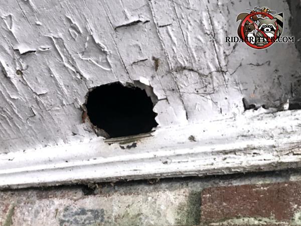 Round squirrel hole about two and a half inches in diameter through the soffit panel of a house in Atlanta