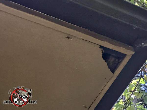 Squirrel hole in the corner of the plywood soffit panel of a house in Stone Mountain Georgia