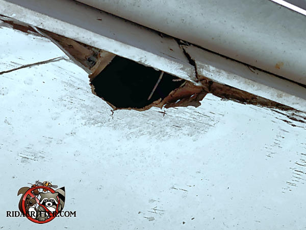 Fist sized squirrel hole through the plywood soffit panel and into the attic of a house in Stone Mountain Georgia