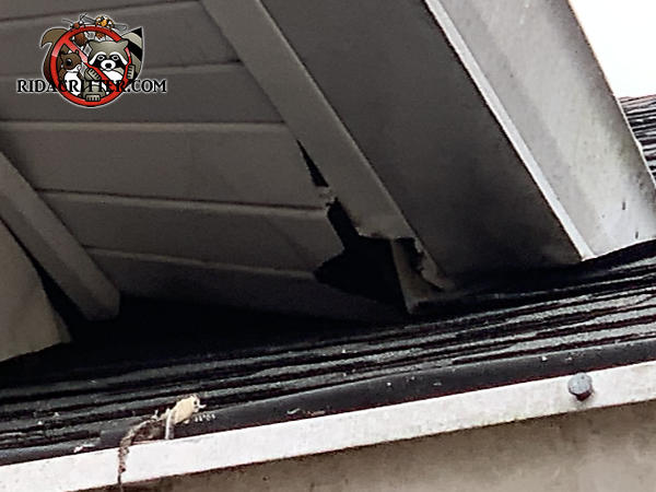 Squirrel gnawed through the metal soffit rail and soffit panel to get into the attic of a house in Tallapoosa Georgia