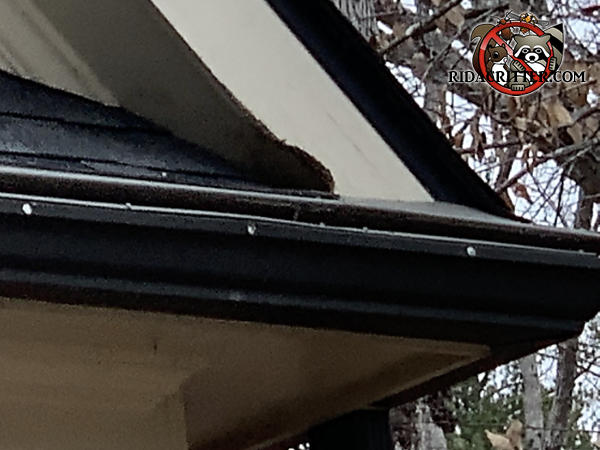 Squirrel hole gnawed through the fascia and into the attic of a house in Winder Georgia