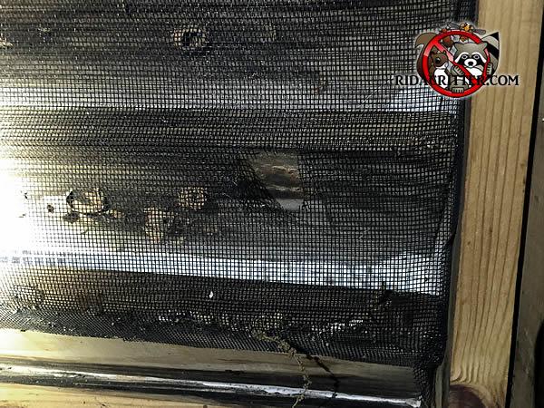 Squirrel Removal And Squirrel Proofing In Metro Atlanta