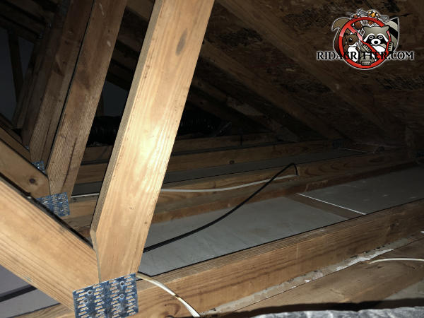 Clean floor of the unfinished attic of a house in Atlanta after squirrel droppings and urine and contaminated insulation were removed.