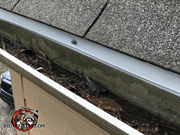 Folded sheet metal applied to the edge of a roof to cover the gaps and prevent squirrels from getting into the attic of a house in Atlanta.