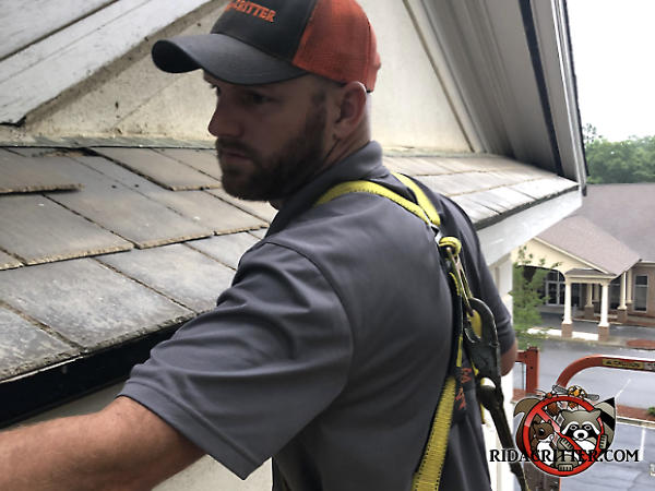 Man wearing a safety harness standing on a platform list intently sealing the edge of the roof of a house in Athens Georgia to keep squirrels out of the attic.