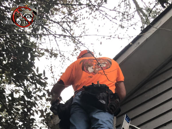 Man on a ladder with tree branches around him is sealing the edges of a roof in order to keep squirrels out of the attic of a house in Riverdale Georgia