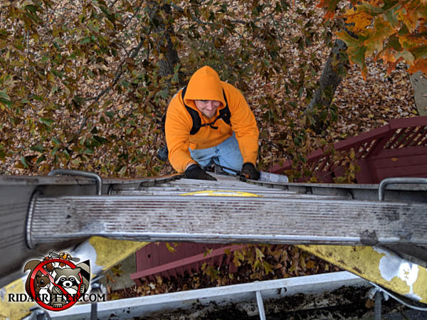 View from the top of a ladder of a smiling man climbing the ladder to remove squirrels from a house in Atlanta