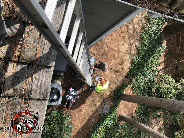 Picture taken from the roof during a squirrel removal job at a house in Atlanta showing the technicians at the foot of the ladder preparing their traps