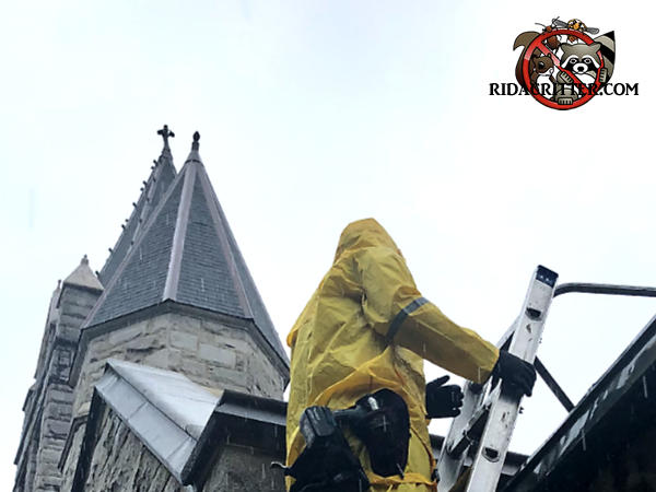 Man wearing rain gear on a ladder sealing squirrels out of the roof of a church in Atlanta with the church steeple in the background