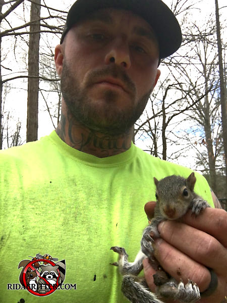 Male animal control technician holding a young squirrel in his hand after removing it from the attic of a house in Signal Mountain Tennessee
