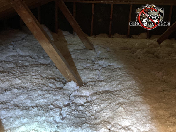 Squirrel Trails Through The Insulation In An Attic In