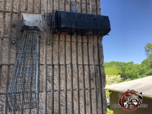 Two squirrel traps fastened to the exterior wall near a vent on a commercial building in Union City Georgia