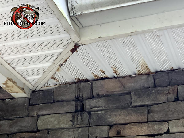 Squirrel urine dripping from the soffits onto the walls of a stone house in Jasper Georgia.