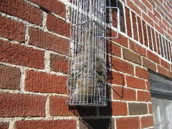 Squirrel Removal Atlanta Marietta Peachtree City Ga