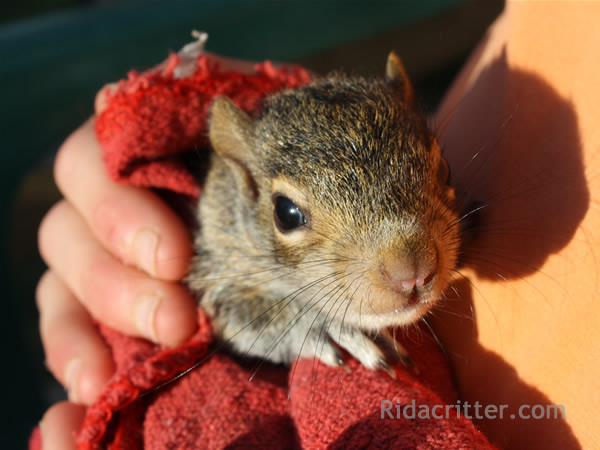 Squirrel Removal And Damage Repair Roswell Columbus