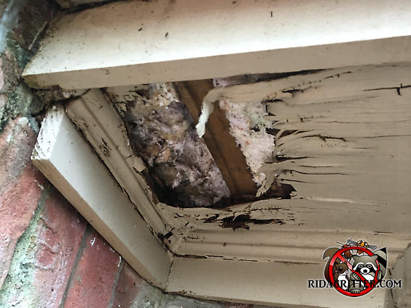Severe water damage rotted away about a square foot of the plywood soffit panel and exposed a squirrel nest in a house in Johns Creek Georgia
