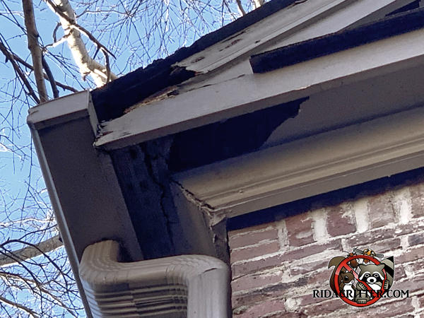 The soffit panel and the corner of the soffit were damaged by both water and squirrels