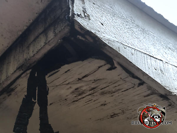 Water damage to the corner of the soffit panel allowed squirrels into the attic of a house in Harrison Tennessee