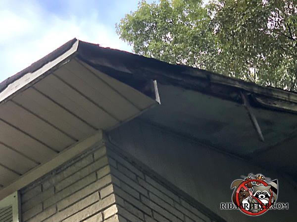 Gaps created by severe water damage to the side of the roof of a house in Mableton Georgia must be repaired to keep squirrels out of the attic.
