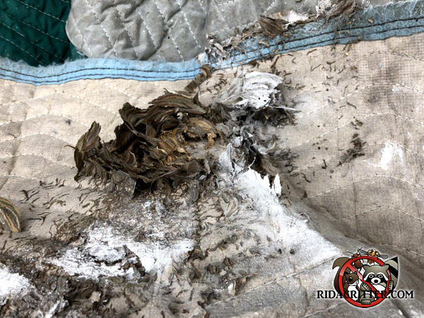 Yellow jacket nest on a shipping pad with insecticide dust on it after being removed from a house in Atlanta