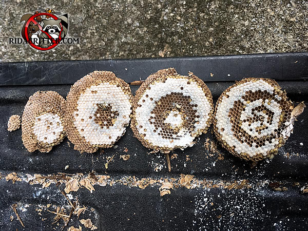 Five yellow jackets nest portions of various sizes on the tailgate of a pickup after being removed from a house in Atlanta