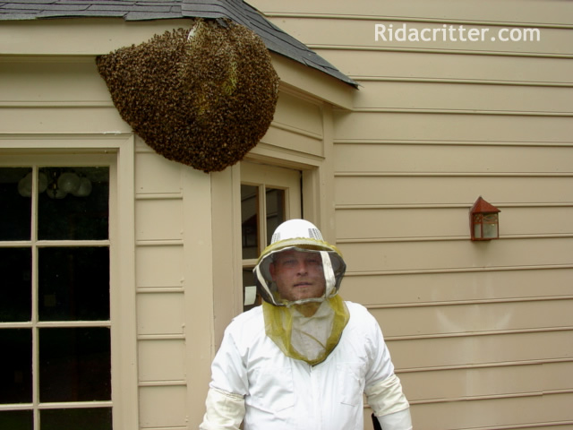 Honeybee Removal Amp Control Birmingham Hoover Anniston