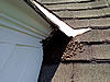 Honeybees outside a Birminghamm Alabama home by a second floor window